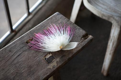bunaken flower