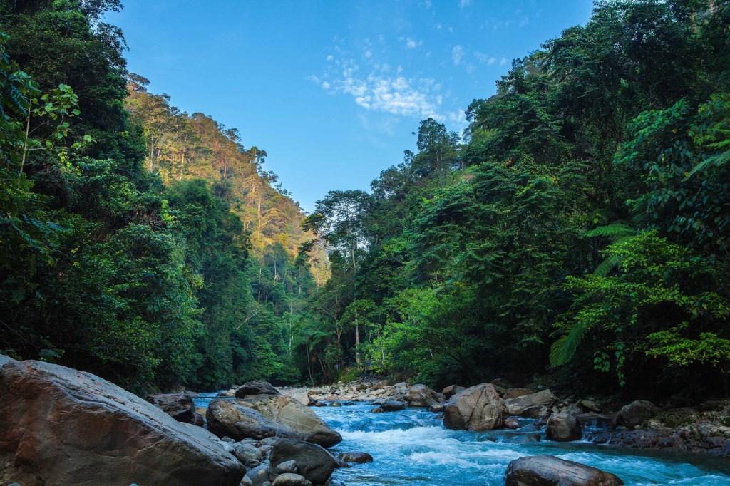 Jungelen på Sumatra