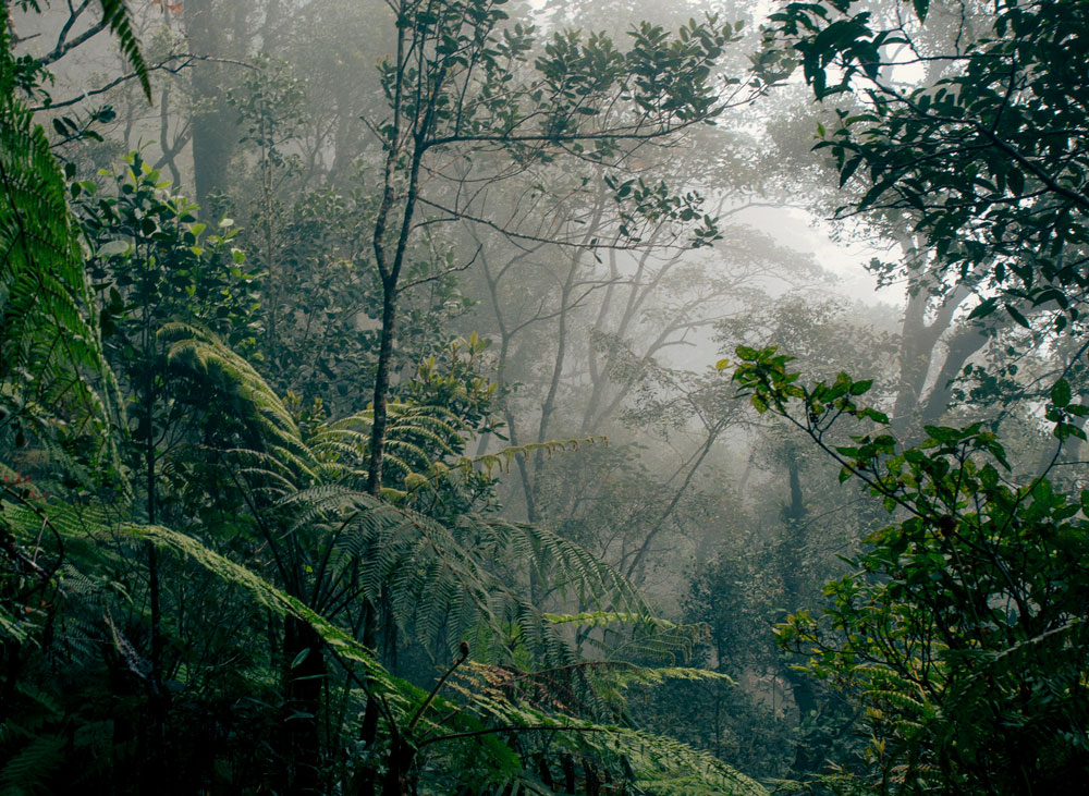 Borneo_rainforest_edit